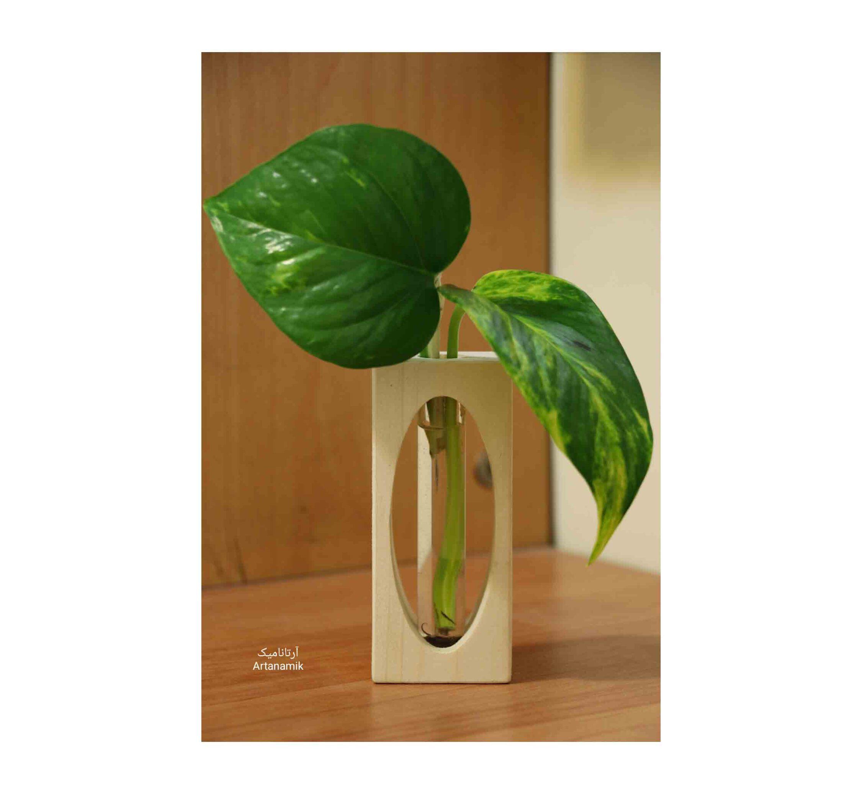 گلدان چوبی ساخته شده از چوب و شیشه مناسب گیاه پتوس، دارای نمایشگر آب، گلدان دکوری