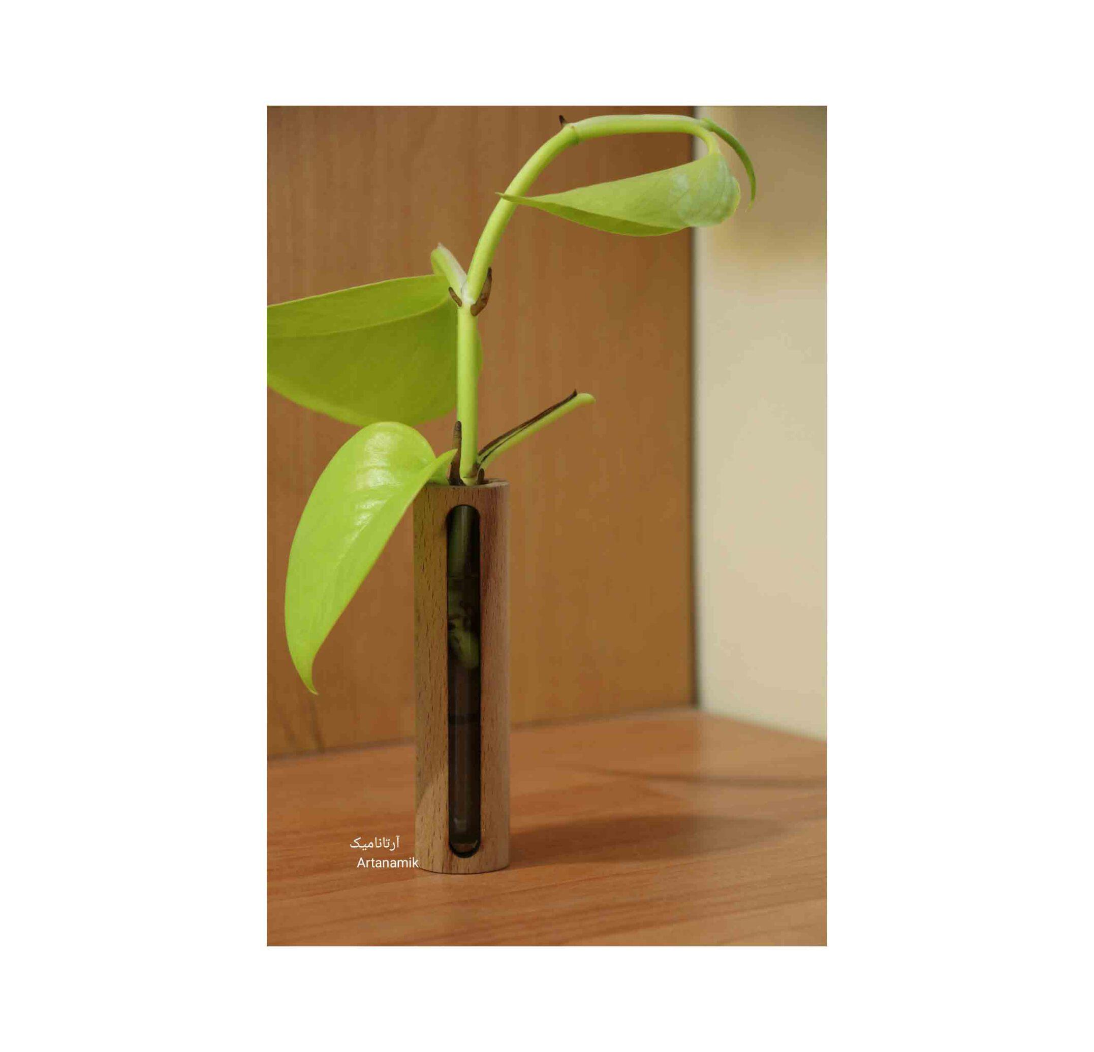گلدان چوبی ساخته شده از چوب و شیشه مناسب گیاه پتوس، دارای نمایشگر آب